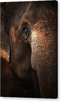 Close Up Face Of Thai Elephant Canvas Print by presented by Zolashine