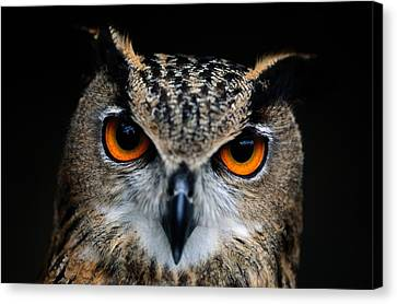 Wild Canvas Print - Close Up Of An African Eagle Owl by Joel Sartore