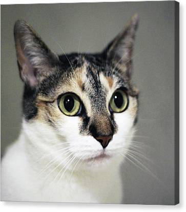 Close Up Of Cat Canvas Print by Saulgranda