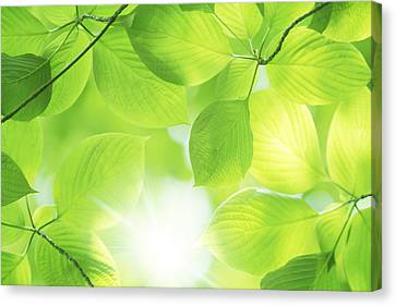 Close-up Of Fresh Green Leaves Canvas Print by Imagewerks