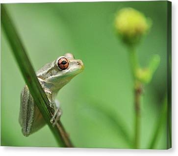 Close Up Of Frog Canvas Print by Lon Fong Martin