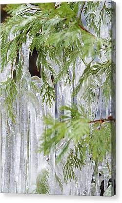 Close-up Of Ice Covered Tree Branch Canvas Print by James Forte