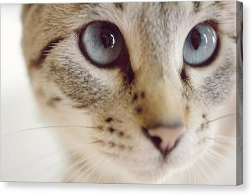 Close Up Of Kitten Canvas Print by Reiko Zoe T.