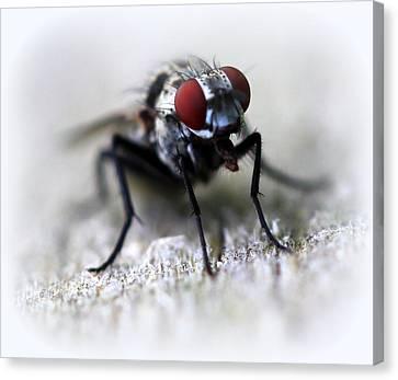 Closeup Of A Fly  Canvas Print by Maureen  McDonald
