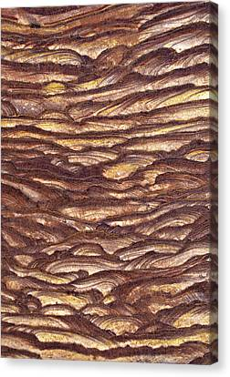 Closeup Of Sandstone Patterns, Petra, Jordan Canvas Print by Fred Bruemmer