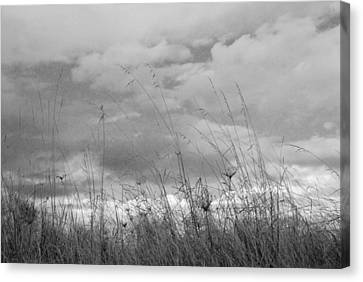 Canvas Print featuring the photograph Cloud Watching by Kathleen Grace