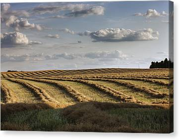 Clouds Over Canola Field On Farm Canvas Print by Dan Jurak