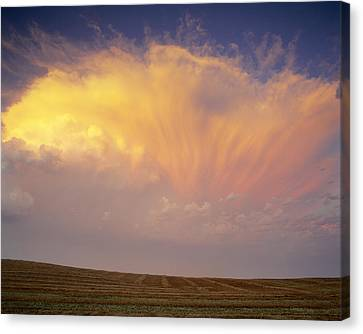 Clouds Over Canola Harvest, Saint Canvas Print by Yves Marcoux