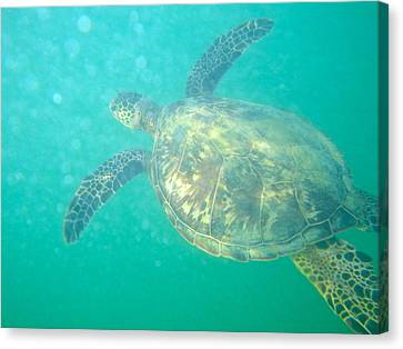Clyde The Sea Turtle Canvas Print by Erika Swartzkopf