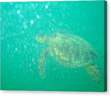 Clyde The Turtle Three Canvas Print by Erika Swartzkopf