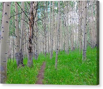 Co Aspen Mtn.bike Trail Canvas Print