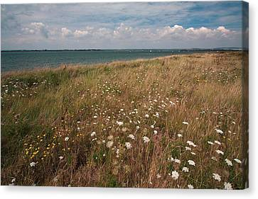 Canvas Print featuring the photograph Coastal Flowers by Shirley Mitchell