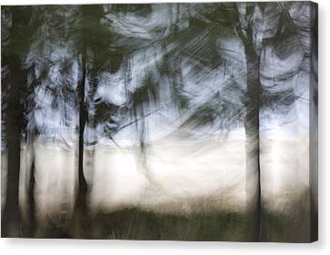 Coastal Pines Canvas Print by Carol Leigh