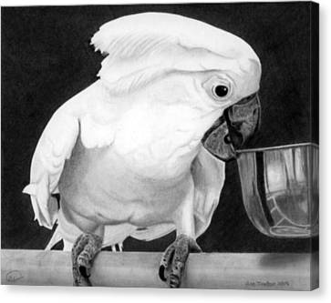 Canvas Print featuring the drawing Cockatoo by Ana Tirolese