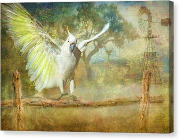 Cockatoo Dreaming Canvas Print by Trudi Simmonds