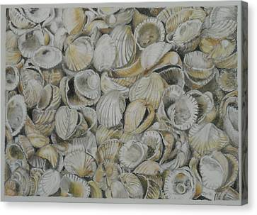 Cockle Shells Canvas Print