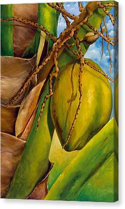 Coconuts Serie 2 Canvas Print by Jose Romero
