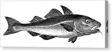 COD Canvas Print by Granger