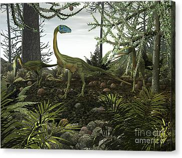 Coelophysis Dinosaurs Walk Amongst Canvas Print by Walter Myers