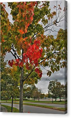 Canvas Print featuring the photograph Cold Autumn Breeze  by Michael Frank Jr