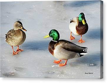 Canvas Print featuring the photograph Cold Ducks by Stephen  Johnson