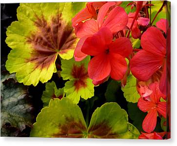 Canvas Print featuring the photograph Coleus And Impatiens Blooms by Cindy Wright