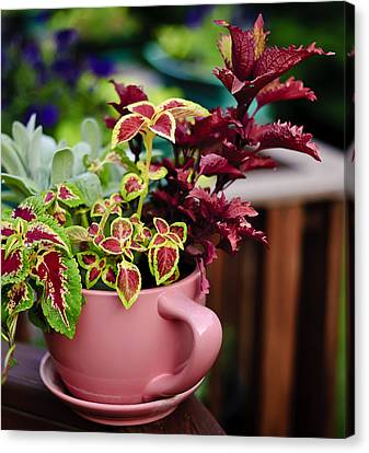 Coleus Collection Canvas Print by Michael Putnam