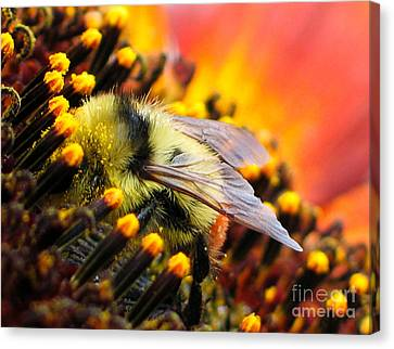 Collecting Pollen Canvas Print