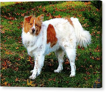 Collie On Lawn Canvas Print