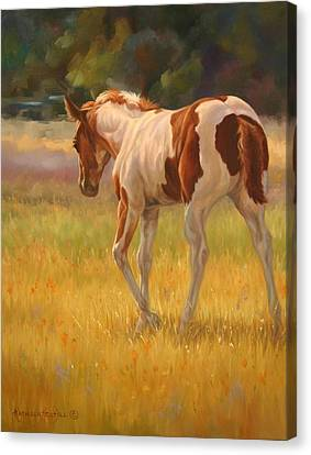 Color Foal Canvas Print by Kathleen  Hill