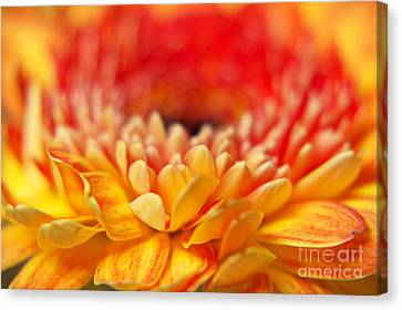 Color Of Summer II Canvas Print by Angela Doelling AD DESIGN Photo and PhotoArt