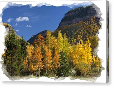 Canvas Print featuring the photograph Colorado Aspens by Judy Deist