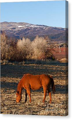 Colorado Horse Ranch At Sunset Near The Rocky Mountains Canvas Print by ELITE IMAGE photography By Chad McDermott