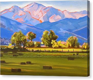 Colorado Pasture Canvas Print