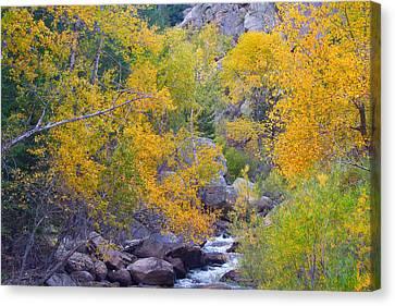 Colorado Rocky Mountain Autumn Canyon View Canvas Print by James BO  Insogna