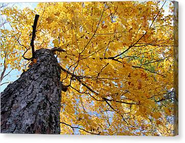Colorful Canopy 130 Canvas Print by Mark J Seefeldt