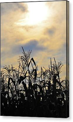 Colorful Clouds Over A Cornfield Canvas Print by Bill Cannon
