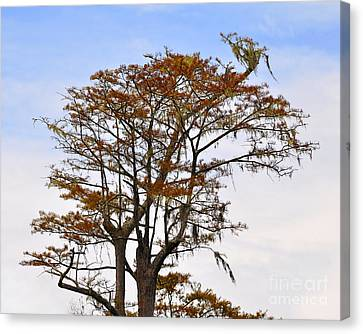 Colorful Cypress Canvas Print by Al Powell Photography USA