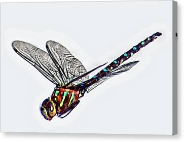 Colorful Dragon Canvas Print by Don Mann