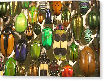 Canvas Print featuring the photograph Colorful Insects by Brooke T Ryan