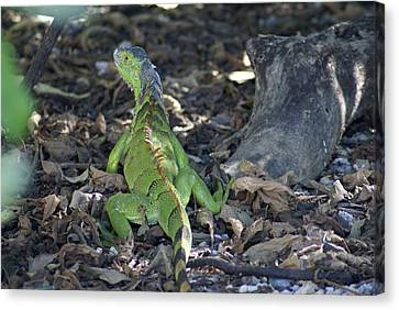 Canvas Print featuring the photograph Colorful Reptile by Jerry Cahill