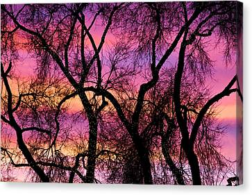 Colorful Silhouetted Trees 21 Canvas Print by James BO  Insogna