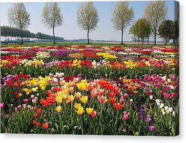 Canvas Print featuring the photograph Colorful Tulips by Hans Engbers