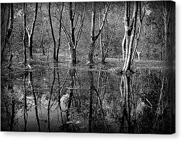 Colorless Serenity Canvas Print by Greg Palmer