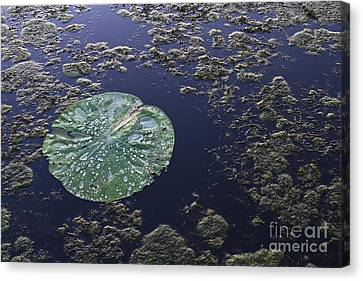 Reflection Canvas Print - Colors Of Our Planet by Ellie Teramoto