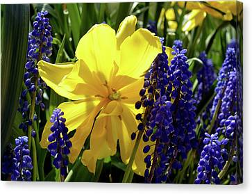 Canvas Print featuring the photograph Colors Of Spring by Pravine Chester
