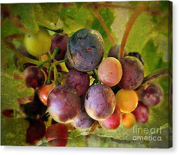 Colors Of Wine Canvas Print by Kevin Moore