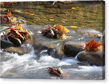 Colors On The Stream Canvas Print by Christopher Ewing