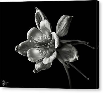Canvas Print featuring the photograph Columbine In Black And White by Endre Balogh