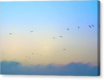 Come Fly With Me Canvas Print by Bill Cannon